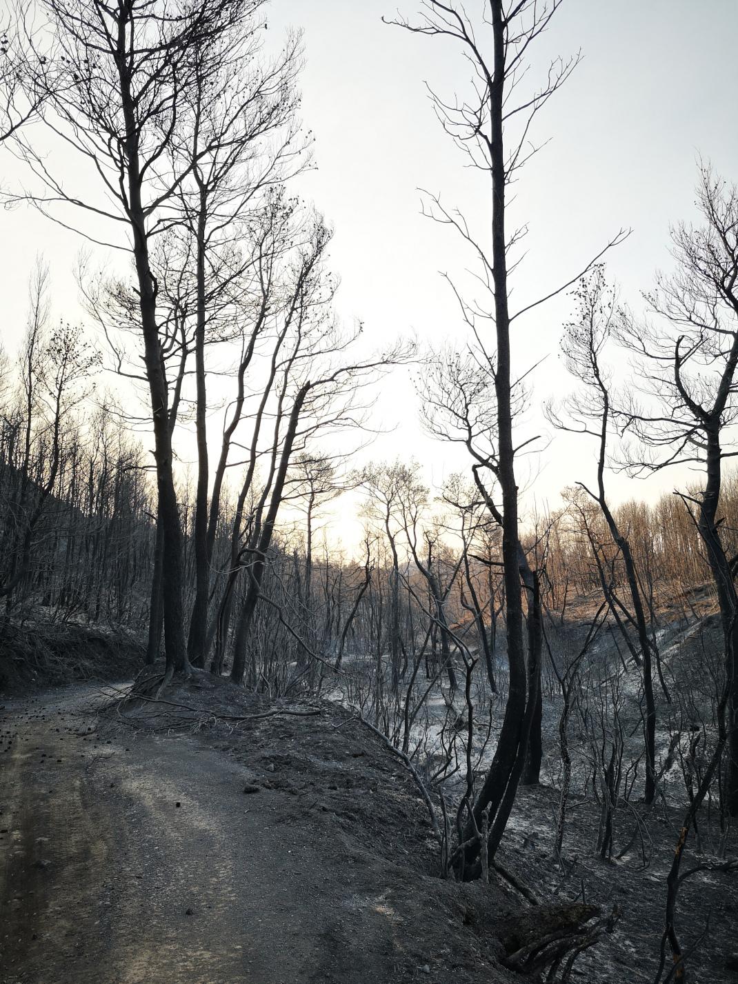Κάηκε το δάσος στο Κρυονέρι