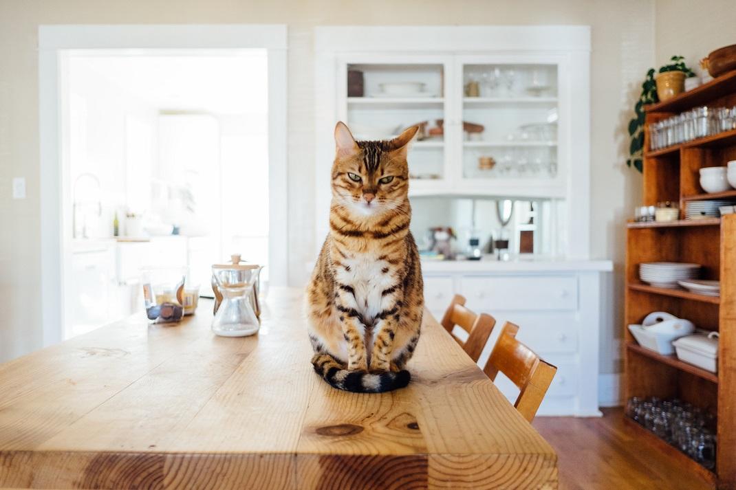 γάτα κάθεται σε τραπέζι