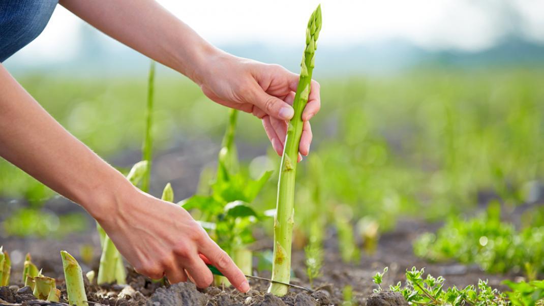 Αυτά είναι τα 10 τρόφιμα που ευθύνονται για την κλιματική αλλαγή στον πλανήτη | BOVARY